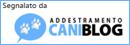 Blog addestramento cani e cuccioli, articoli online per cani e gatti
