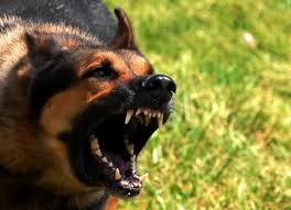 Aggressività del cane, ecco cosa fare