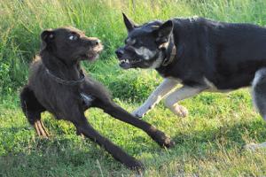 Cane Aggressivo Con Altri Cani O Persone Sconosciute