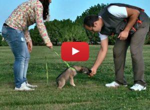 video corso addestramento cani