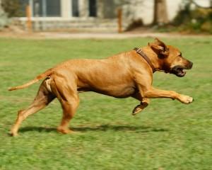 Il cane salta? Ecco cosa fare!