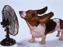 Il caldo e il cane: consigli estivi