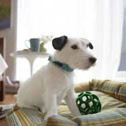 Letti per cani: far dormire il cane nel suo letto