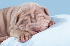 Far dormire il cane nel suo letto