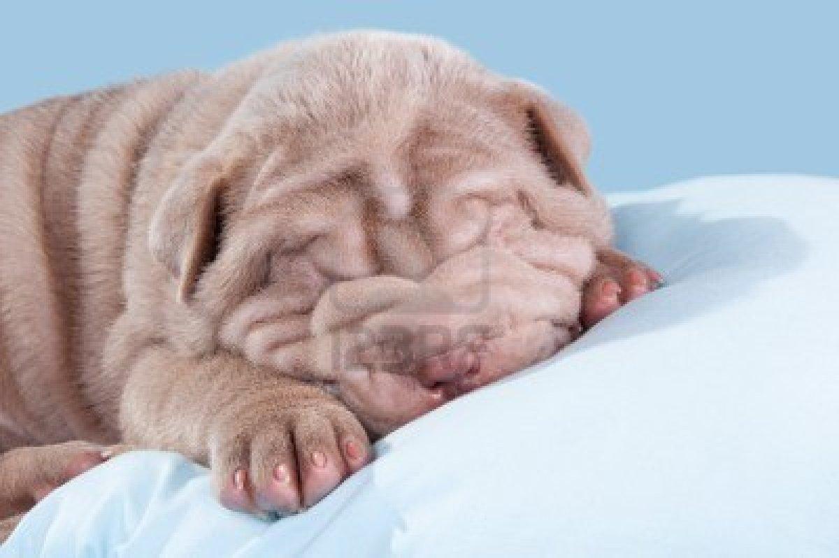 Letti A Baldacchino Per Cani : Lettini per cani consigli per l acquisto a buon prezzo e l utilizzo