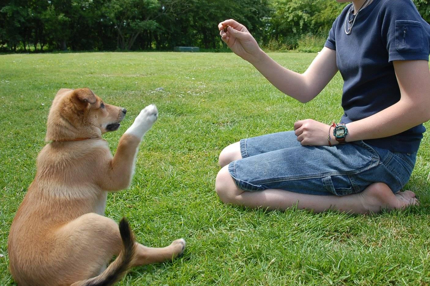 Giochi Intelligenti Per Cani Anche Fai Da Te Per Lattivazione