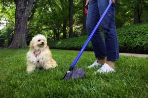 La coprofagia: perché il cane mangia le feci?