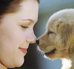 Morsi dei cani: prevenzione ed educazione