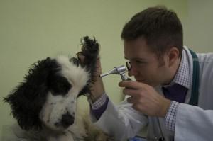 Pulizia orecchie del cane
