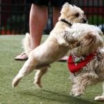 Cane aggressivo con altri cani: cosa fare