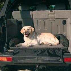 Trasportare il cane in auto