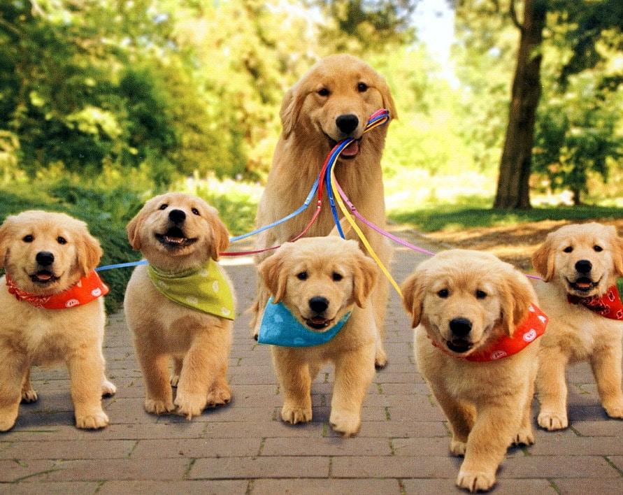 dieta casalinga cucciolo canelo