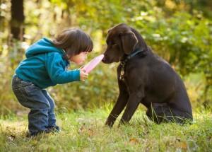 Giochi per cani: l'importanza per lo sviluppo mentale