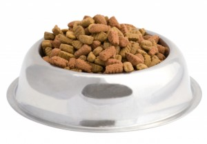 Mangimi per cani: quali scegliere?