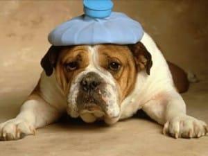 Anche i cani fanno etciù: il raffreddore