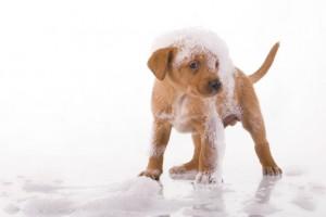 Shampoo per cani: quale acquistare