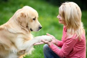 farsi ubbidire dal cane