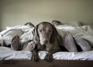 Il mio cane dorme nel letto: che fare?