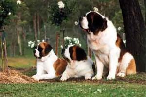 Ipersalivazione del cane: sintomi, cause e rimedi