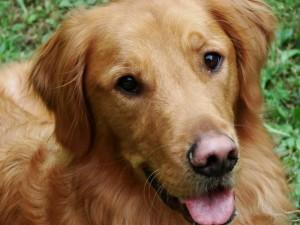 Cause e diagnosi della depigmentazione del naso del cane