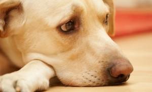 Cane stitico: possibili cause e rimedi efficaci
