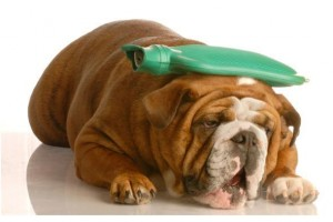 Vomito nel cane