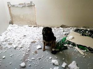 cane fa danni in casa