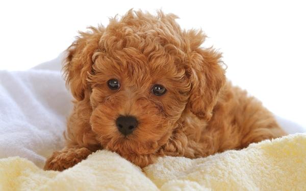 Come Rendere Folto Il Pelo Di Un Cane Consigli Pratici