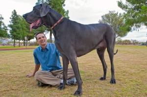 cani di taglia gigante