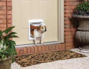Come comportarsi quando il cane non vuole uscire di casa