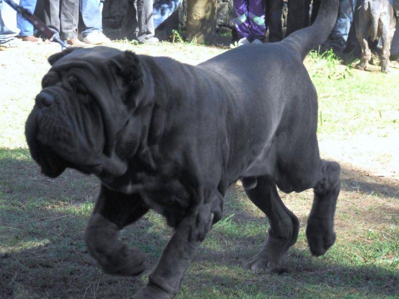 Collari Per Cani Di Grossa Taglia Prezzi Consigli Per Lacquisto