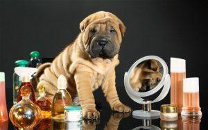 profumo per cani