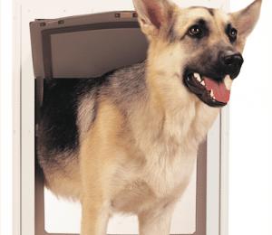 Porta Basculante Per Cani Tipologie Prezzi E Consigli Di