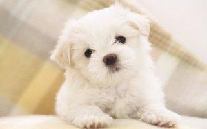 Cucce Per Cani Piccoli Consigli Per Acquisti E Fai Da Te Guida E