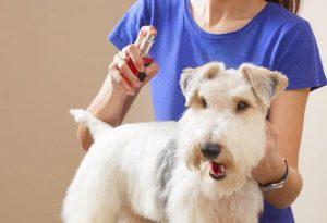 deodorante per cani