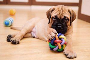 giochi per cuccioli