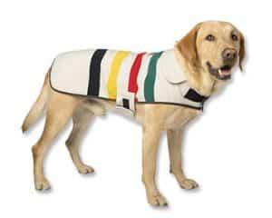 superior quality 8e743 9c402 Giubbotti per cani: taglia piccola e grande, impermeabili o ...