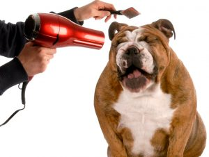 Toelettatura per cani