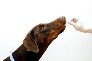 Fermenti lattici per cani