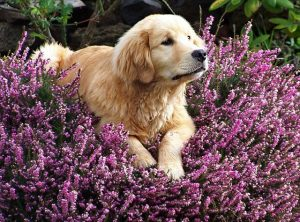 antistaminico per cani