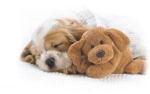 Traquillanti calmanti per cani