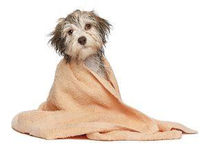 Clorexidina per cani