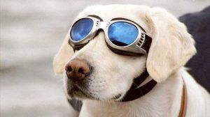 Migliori 7 Occhiali da sole per cani