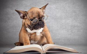 Comandi da insegnare al cane