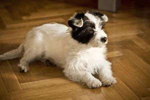 Insegnare il comando terra al cane
